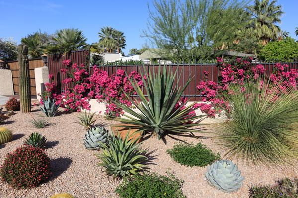 Get creative by adding unique decorative accents and water features to your desert landscape design.